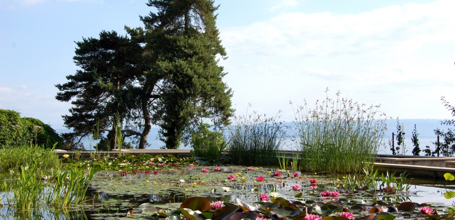 Jardins Ville Evian (208)